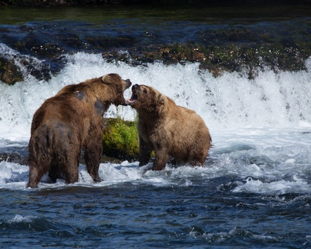 Fighting Bears at Camping